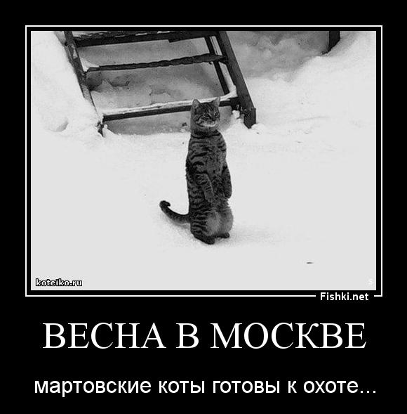 Martovskie koty
